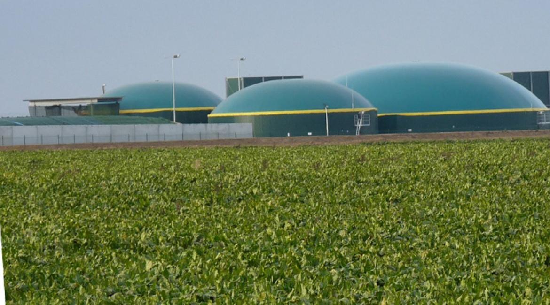 Rübensorten für den Biogasfermenter