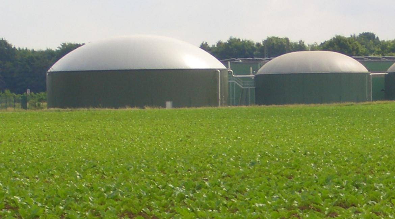 Baustein für die Zukunft: Biogas aus Rüben