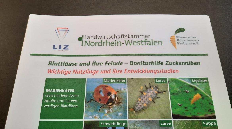 Blattläuse und ihre Feinde